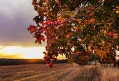 Schön farbiger Herbstlaub Stockfotografie