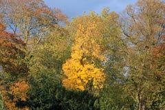Schön farbiger Herbstlaub im Park Stockbild