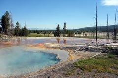 Schön farbiges Mineral-beladenes Wasser in Yellowstone-Park Stockbild