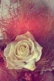 Schön goldene weiße Rose stockfoto