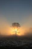 Schön hintergrundbeleuchteter Baum in der nebeligen Landschaft morgens Stockfotografie