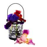Schön   Iris im Vase auf einem weißen Hintergrund Stockfotos