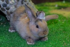 Schön, jung, dreifarbig, wenig Kaninchen und Jungar-Hamster Freunde seit Kindheit lizenzfreie stockbilder