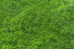 Schön Schnittgrün grasartig stockfotos