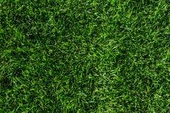 Schön Schnittgrün grasartig lizenzfreies stockbild