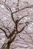 Schön und ruhig im Frühjahr verziert vorbei  stockfoto