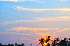 Schön viele Kokosnussbäume im Strandhaussonnenuntergang lizenzfreie stockfotos