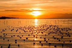 Schön vom Sonnenuntergang mit Wolkenhimmel und -seemöwen über dem Meer Lizenzfreie Stockfotos