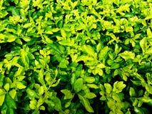 Schön von den grünen kleinen Bäumen im gareden Stockbilder