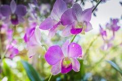 Schön von den Orchideen-Blumen Stockfotografie