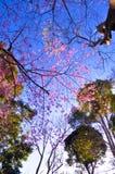 Schön von der Naturjahreszeit Lizenzfreies Stockbild