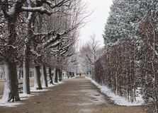 Schönbrunn Palace Garden in Winter with snow Royalty Free Stock Photos