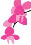 Schöne abstrakte Blume der rosafarbenen Farbe. Lizenzfreies Stockfoto