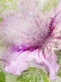 Schöne Abstraktion mit rosa Blume Stockfotografie