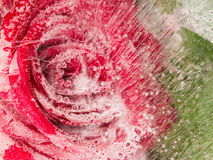 Schöne Abstraktion mit Rotrose Stockbild