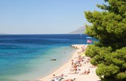 Schöne adriatisches Seebucht mit Kiefern in Kroatien Lizenzfreie Stockfotos