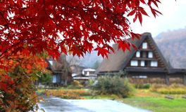 Schöne Ahornblätter in Shirakawago-Dorf stockbilder