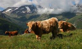 Schöne alpine Landschaft Stockfotografie
