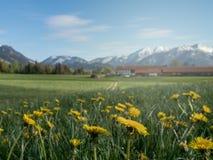 Schöne alpine Landschaft mit Blumenwiese und -alpen im Bayern stockbilder