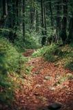 Schöne alte Bäume und Wurzeln mit Moos- und Farnblättern im Holz Lizenzfreie Stockfotos