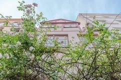 Schöne alte Häuser in Luebeck verzierten mit rosafarbener Blume, Deutschland Stockfotos
