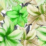 Schöne Amaryllis des klaren Grüns blüht auf weißem Hintergrund Nahtloses Frühlingsmuster Adobe Photoshop für Korrekturen Lizenzfreie Stockfotografie