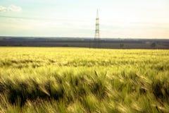 Schöne Anlagen auf einem Gebiet lizenzfreie stockfotografie