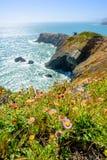 Schöne Ansicht über eine Wiese, einen Ozean und eine Vogelinsel Lizenzfreie Stockfotografie