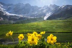 Schöne Ansicht über grüne Wiese mit gelben Blumen auf Vordergrund nahe bei Berg am sonnigen klaren Sommertag in Svaneti, Georgia lizenzfreie stockfotografie