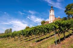 Schöne Ansicht der Pilgerfahrtkirche in Birnau bei Bodensee mit den Reben im Vordergrund stockfoto