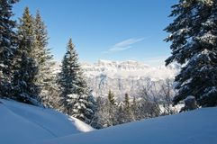 Schöne Ansicht der schneebedeckten Berge durch eine Baumgruppe an einem sonnigen Wintertag lizenzfreie stockfotografie