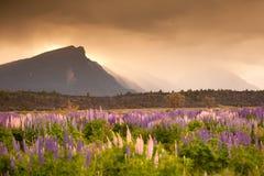 Schöne Ansicht des Blumengartens, Südinsel, Neuseeland Stockbild