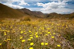 Schöne Ansicht des Blumengartens und des Berges, Südinsel, Neuseeland Lizenzfreie Stockbilder