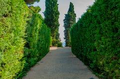 Schöne Ansicht des Parks mit dem hellen Grün Lizenzfreie Stockfotos