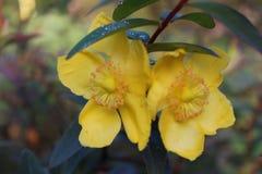 Schöne Ansicht des Porträtbildes der gelben Blume Stockfotos
