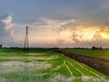 schöne Ansicht des Reisfelds an einem Abend stockfotos