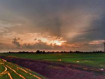 schöne Ansicht des Reisfelds an einem Abend lizenzfreies stockfoto