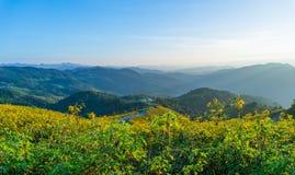 Schöne Ansicht eines Hügels der gelben Ringelblume blüht mit Bäumen hinten Stockbilder