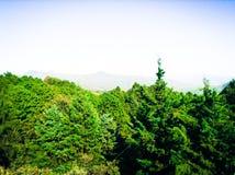 Schöne Ansicht innerhalb eines mysteriösen Waldes Lizenzfreie Stockfotos