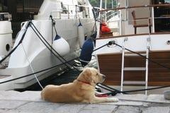 Schöne Ansicht Kroatien-Yacht Hundeadriatisches See Stockfoto
