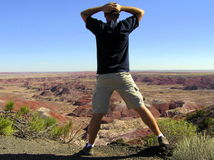 Schöne Ansicht versteinerten Forest National Parks lizenzfreie stockfotos
