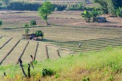 Ackerland, Thailand Lizenzfreie Stockfotos