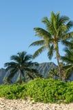 Schöne Ansicht von Anlagen, von Palmen und von Gebirgszug auf Waimanalo-Strand, Ost-Oahu, Hawaii, USA Waimanalos lange Strände si stockfoto