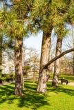 Schöne Ansicht von drei Stämmen Bäumen und grünem Gras zwischen zwei Erdwegen lizenzfreie stockfotos