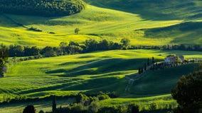 Schöne Ansicht von Grünfeldern und -wiesen bei Sonnenuntergang in Toskana stockbilder