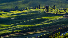 Schöne Ansicht von Grünfeldern und -wiesen bei Sonnenuntergang in Toskana lizenzfreie stockfotos