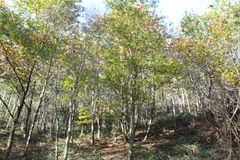 Schöne Ansicht von Herbstsaisonbäumen Stockbilder