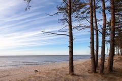 Baltische Küste Lizenzfreie Stockbilder