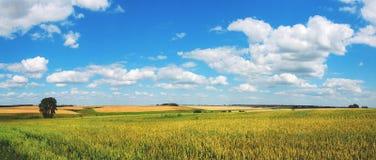 Schöne Ansicht von reifen Weizenfeldern lizenzfreie stockfotos