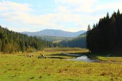 Schöne Ansichten der Karpaten-Berge und -wiese Stockbilder